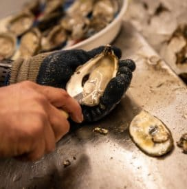 Shucking Fresh Apalachicola Oysters at Lynn's