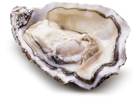 raw shucked oyster